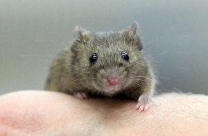 Bline Mouse