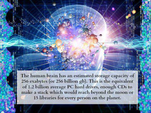 Storage Power of the Human Brain