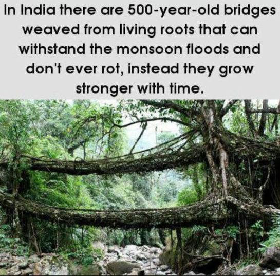 Tree-Root Bridges